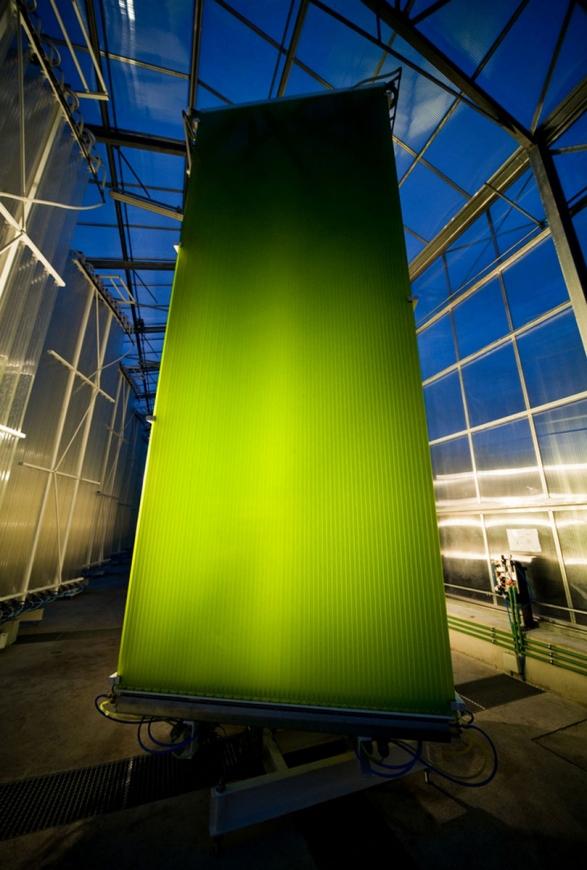 Ecoduna photobioreactor